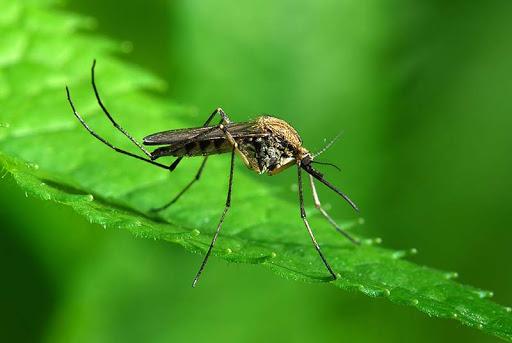 Muỗi sống ở đâu