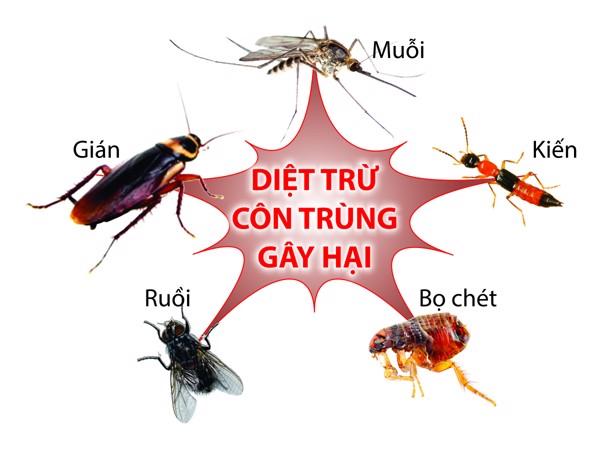 Thực hiện các biện pháp để chống côn trùng cắn hiệu quả nhất