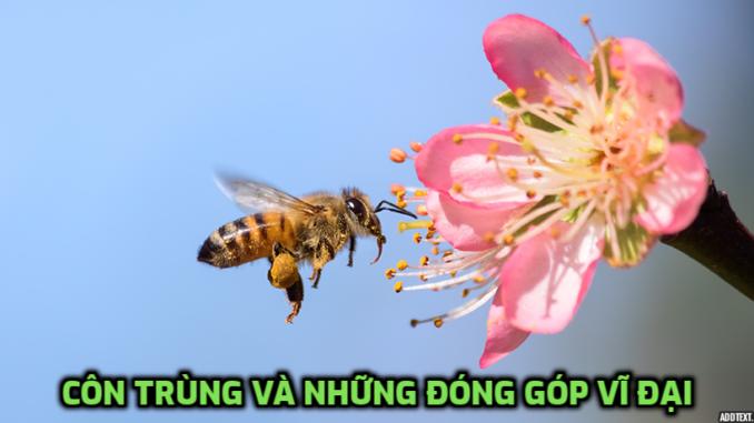 Cần bảo vệ những loại côn trùng có lợi để mang lại nhiều giá trị trong cuộc sống