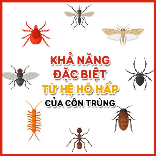 Hệ hô hấp của côn trùng có sự khác biệt đối với con người, chúng hoạt động nhờ vào sự trao đổi khí qua da.