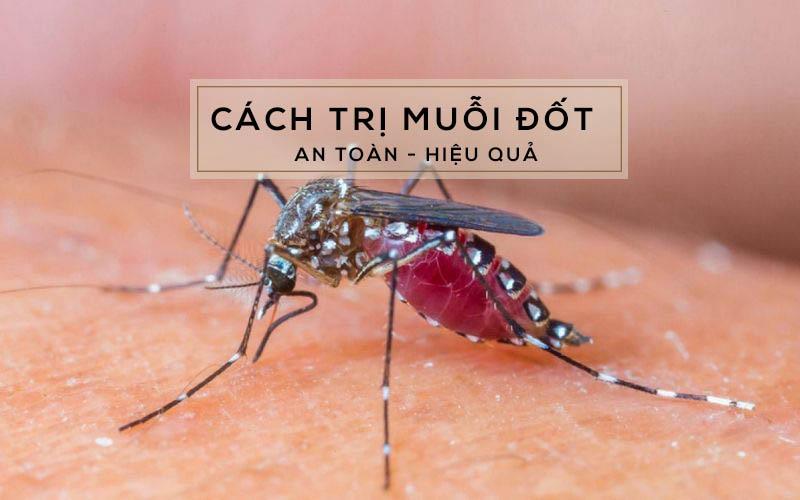 Những cách trị muỗi đốt mà mọi người có thể sử dụng