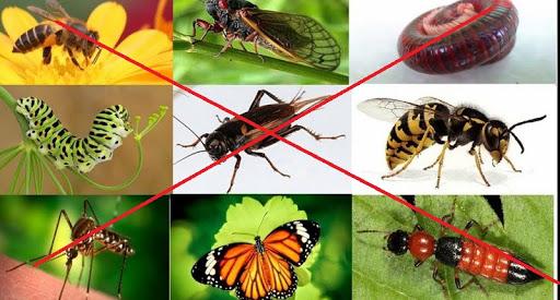 Diệt trừ côn trùng trong nhà