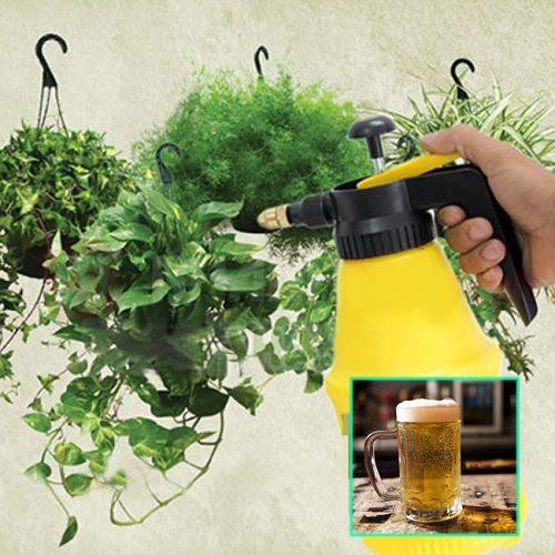 Phương pháp diệt sâu rệp bằng bia có nhiều ưu điểm nổi bật được nhiều người ưa chuộng